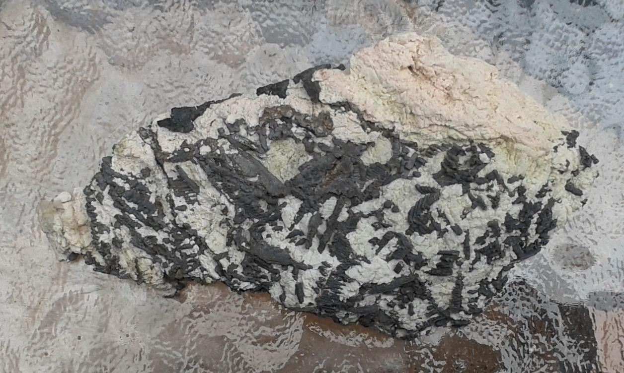 Silver dendritic specimen, Langis mine, Cobalt Ontario -004